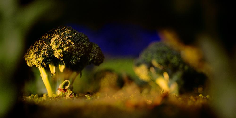 Woods of Broccoli